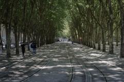 A railway runs through an avenue of sycamore trees in Bordeaux