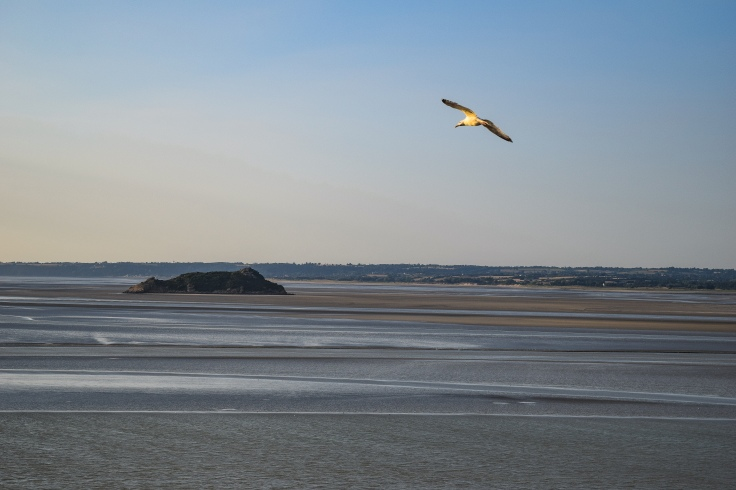 Seagulls flying over the islands and the Bay of Mont Saint Michel during low tide