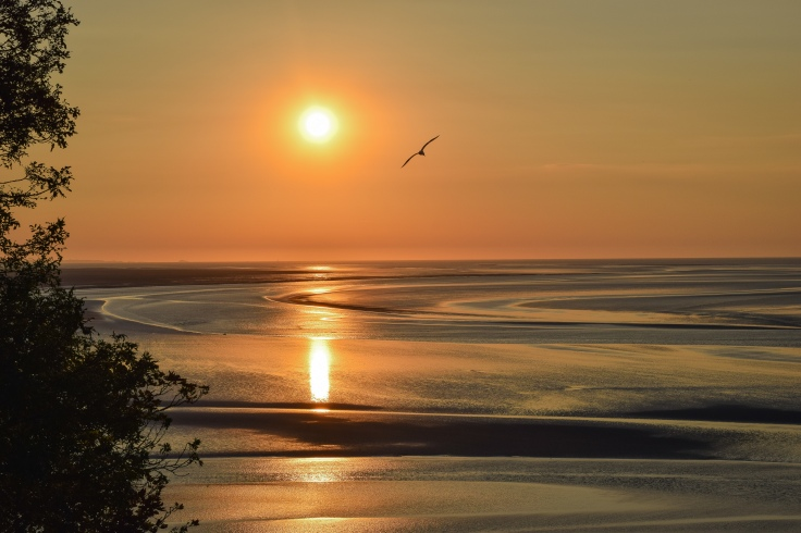 A seagull flies in front of the setting sun during sunset over the Bay of Mont Saint Michel