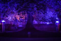 The Tree of Liberty lit in purple at night